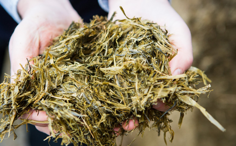 Correctly balancing rations key to making the most of extra silage