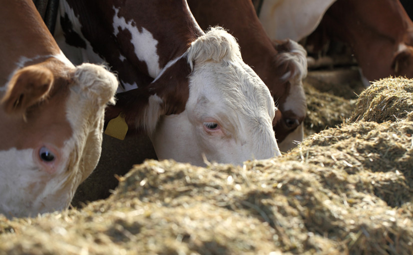 Creating efficient diets the key to lowering overall beef feed costs