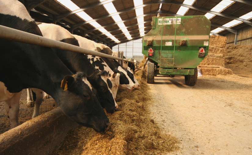 Fermentation efficiency and feed choice key to IOFC this winter