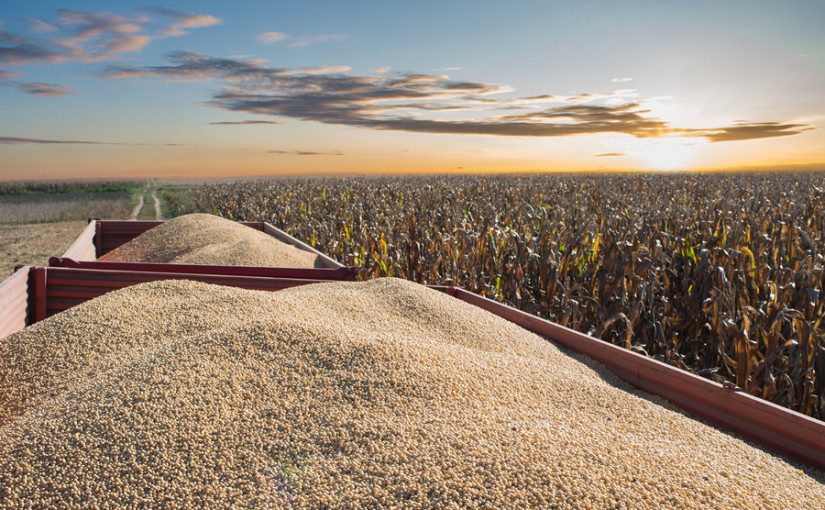Feed market outlook – Nov 2019