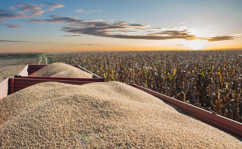 Feed market outlook – Nov 2019
