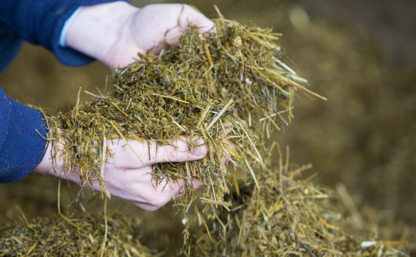 Ten steps to more efficient rations that lower feed costs