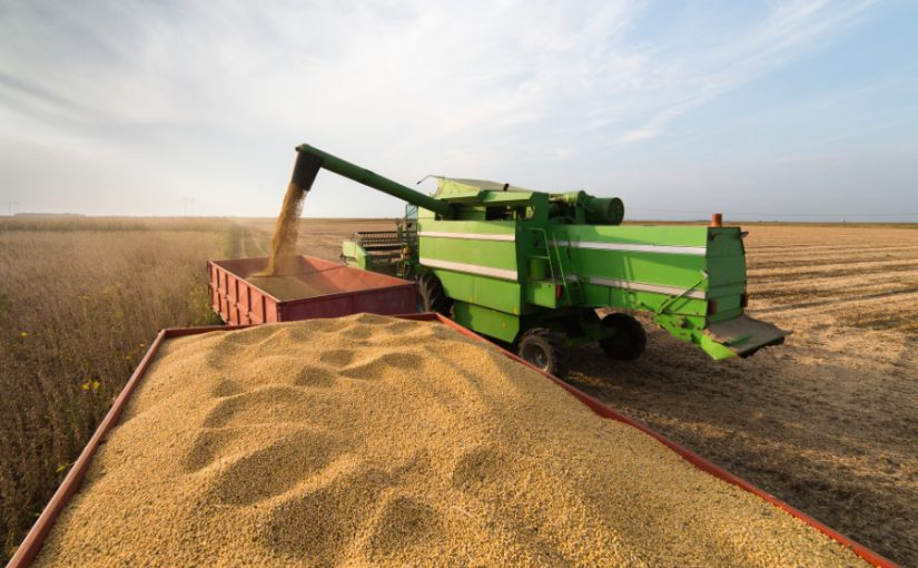 Combine entering soyabeans into a trailer
