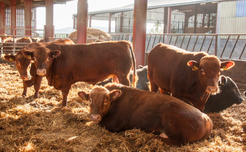 Consistent high performance the key to beef system's success