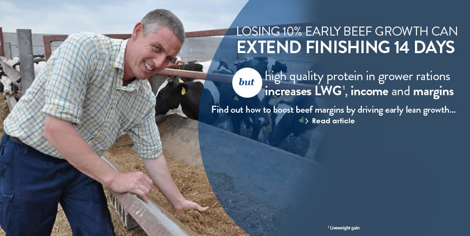 Link to beef protein quality release